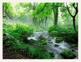 """Developing the Okudaisen brand: famous as the """"Village of a Forest, Water and Fruit"""""""