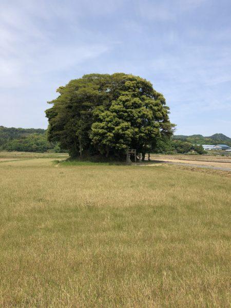 ☆彡南部町に「トトロの森」発見!!